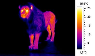 Transparent ceramics - Thermogram of a lion