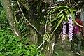 Wild flowers cherrapunji.jpg