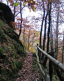 Wildnis-Trail Nationalpark Eifel.jpg