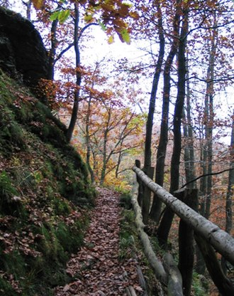 Eifel National Park - Section of the Wilderness Trail near Laykaul