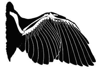 Wing feathers and bones
