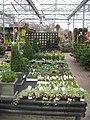 Winter colours - geograph.org.uk - 1087408.jpg