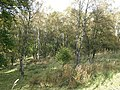 Woodland, Babbithill - geograph.org.uk - 1593422.jpg