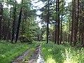 Woodland above Saint Hill - geograph.org.uk - 12350.jpg