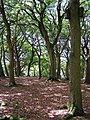 Woodland at Coffins Holms, New Forest - geograph.org.uk - 211529.jpg