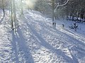Woodland in the snow - geograph.org.uk - 1710813.jpg