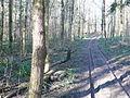 Woodland track near Purse Caundle - geograph.org.uk - 687694.jpg