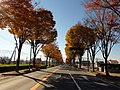 Yamanashi-Prefectural road route №117.JPG