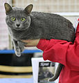 Yog-Hurt's Atlach-Nacha at Turok Cat Show.JPG
