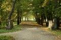 (zetem) Chocianów - Park pałacowy.jpg