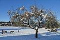 Äpfel im Dezember 4.JPG