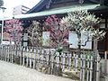 Ôsaka-ten'man-gû Shintô Shrine - Plum trees.jpg