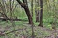 Łęg wiązowo-jesionowy rezerwat Las Bielański 2017.jpg