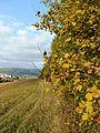 Žilina, Slovakia - panoramio (75).jpg