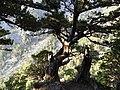 Δέντρο.jpg