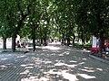 Аллея на Валу. Фото Виктора Белоусова. - panoramio.jpg
