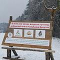 Боровлянский лес д.Боровляны.jpg
