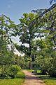 Ботанический сад. Аллея.jpg