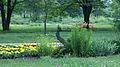 Ботанічний сад. Квітучий птах.jpg