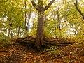 Вінничина, Муровані Курилівці парк Жван 18.jpg