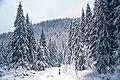 Горгани взимку, ліс.jpg