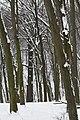 Дуби Рильського DSC 0131.jpg