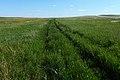 Заброшенная степная дорога в южном направлении - panoramio.jpg