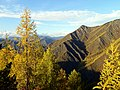 Золотые лиственницы и шоколадные горы.jpg