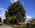 Комплекс Миколаївського монастиря в Немирові P1090064.JPG