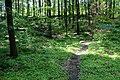 Національний ботанічний сад ім. М.Гришка Букова діброва 04.jpg
