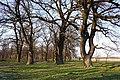 Орлівщанські дубові насадження.jpg