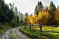 Осінь в Ужанському національному природному парку.jpg