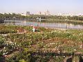 Парк Щербакова. Розарий.jpg