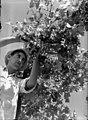 אבוקה - בציר ענבים-JNF045208.jpeg