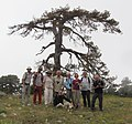 אגודת חובבי הפרפרים בצילום קבוצתי בעקבות פרפרי הרי אמנוס בדרום טורקיה.jpg