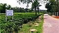 রাঙাপানি চা বাগানের রাস্তা-2.jpg