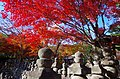 化野念仏寺 京都市右京区 Adashino Nembutsuji 2013.11.21 - panoramio.jpg