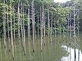 小山内裏公園の池 - panoramio.jpg