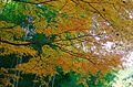 延命寺ちかくの紅葉 河内長野市 2014.11.27 - panoramio.jpg