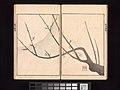 池田孤邨画 『抱一上人真蹟鏡』-Ōson (Hōitsu) Picture Album (Ōson gafu) MET DP263503.jpg