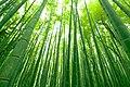 竹林 - panoramio.jpg