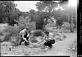 00770 Grand Canyon- McKee and Elzada Examine Plants 1938 (4739750214).jpg