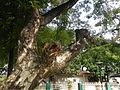 07890jfCamposanto Park Raymond Nonnatus Church Parish Moncada Tarlacfvf 37.JPG