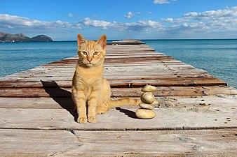 16-11 79 024 5, Baleares, Mallorca, Playa de Muro.jpg