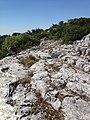 16980 Erenler-Orhaneli-Bursa, Turkey - panoramio (22).jpg