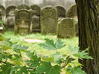 1734 cmentarz żydowski Ostrowiec Świętokrzyski 4.JPG