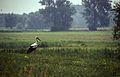 1997-07-29-Oderhochwasser-RalfR-img021.jpg