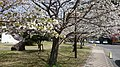 1 Chome-12 Sakamoto, Nagasaki-shi, Nagasaki-ken 852-8102, Japan - panoramio (5).jpg