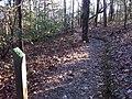 2.5 mile marker len foote hike inn trail amicalola falls ga - panoramio.jpg