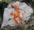 20060611-Flechten auf Kalkstein im Karwendel.jpg
